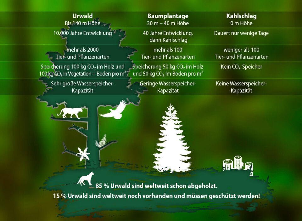 Warum unser Wald besonders schützenswert ist.