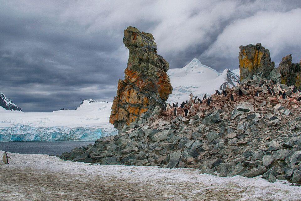 "9. Platz: ""Half-Moon-Island"", Antarktis, Sigrid Wolf-Feix"