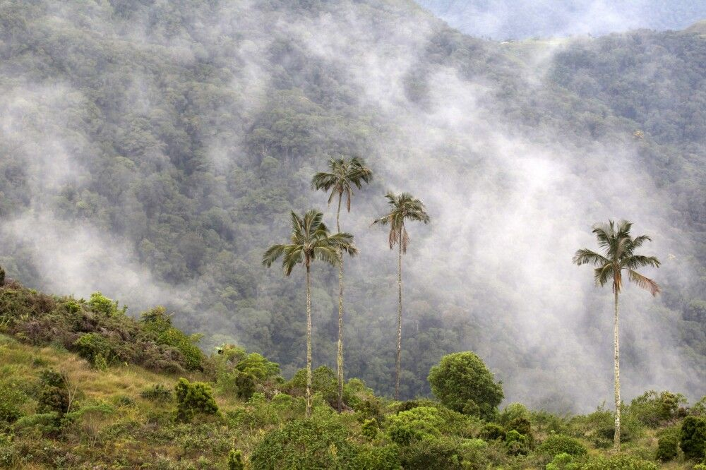 Sierra Nevada de Santa Marta - das höchste Küstengebirge der Welt mit fast 6000 m