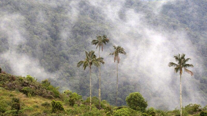 Sierra Nevada de Santa Marta - das höchste Küstengebirge der Welt mit fast 6000 m © Diamir