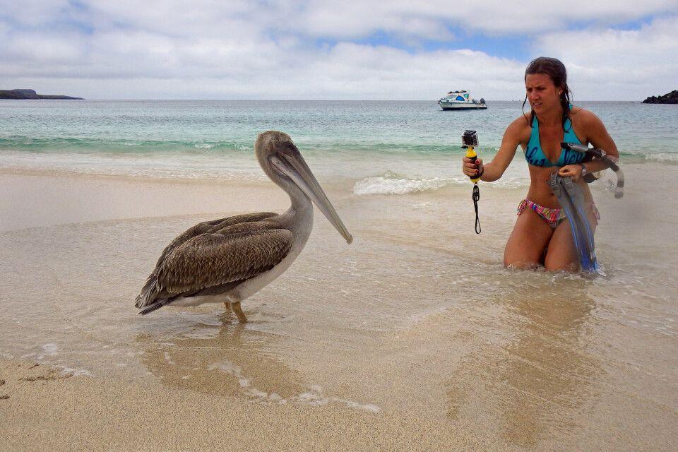 Pelikan am Strand