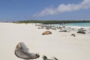 Strand mit Seelöwenkolonie