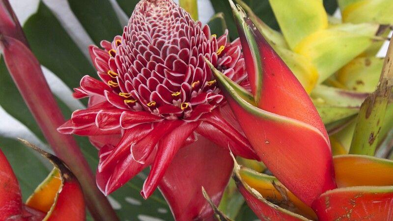 Tropische Blütenpracht © Diamir