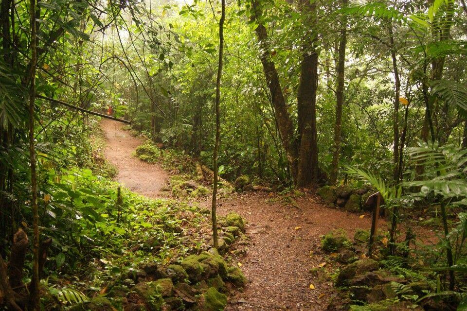 Cerro Azul Meamber NP