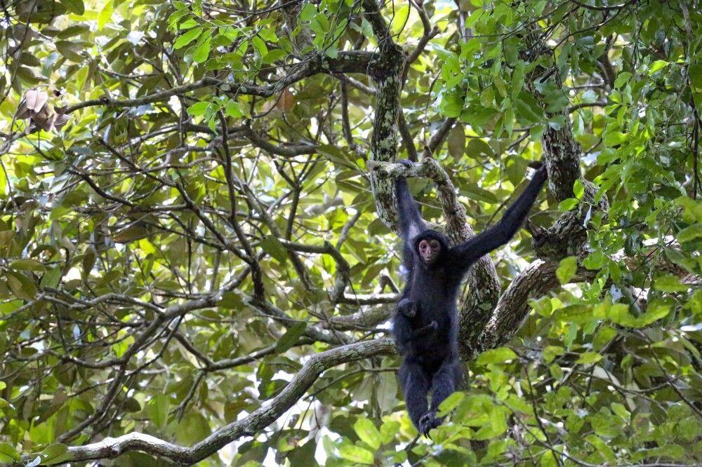 Die hiesige Tierwelt auf Exkursionen entdecken