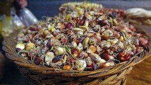 Mais - eine wichtige Basis vieler Anden-Gerichte
