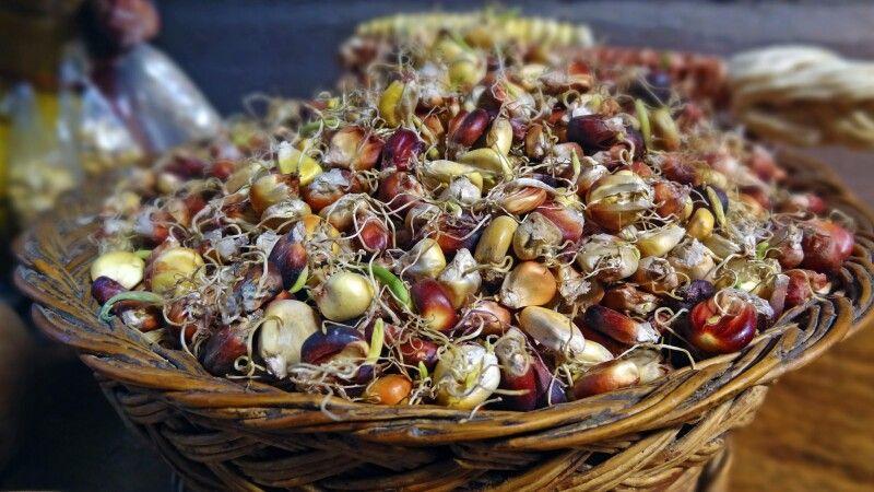 Mais - eine wichtige Basis vieler Anden-Gerichte © Diamir