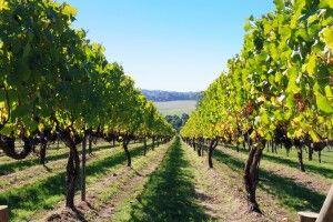 Weingebiete rund um Adelaide