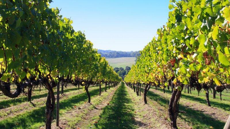 Weingebiete rund um Adelaide © Diamir