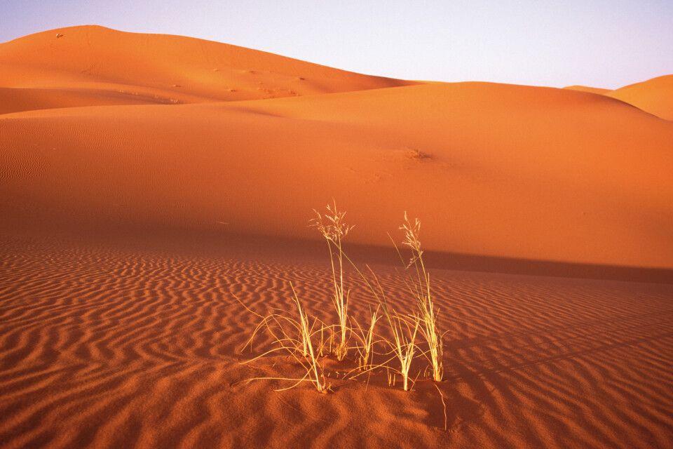 Leben in der Wüste
