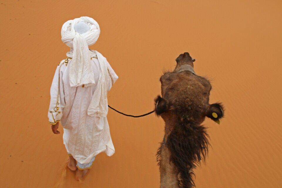 Blick aus der Kamelperspektive
