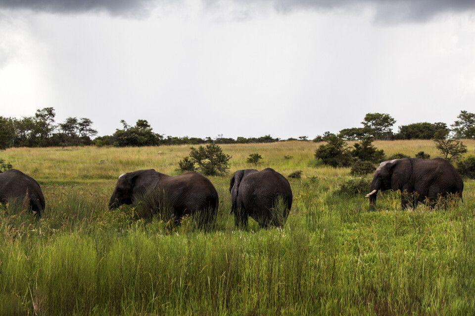 Elefanten im Gonarezhou-Nationalpark
