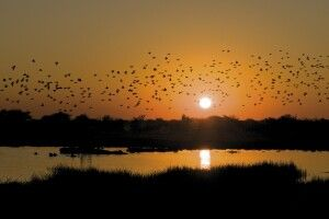 Abendstimmung über dem Okavango
