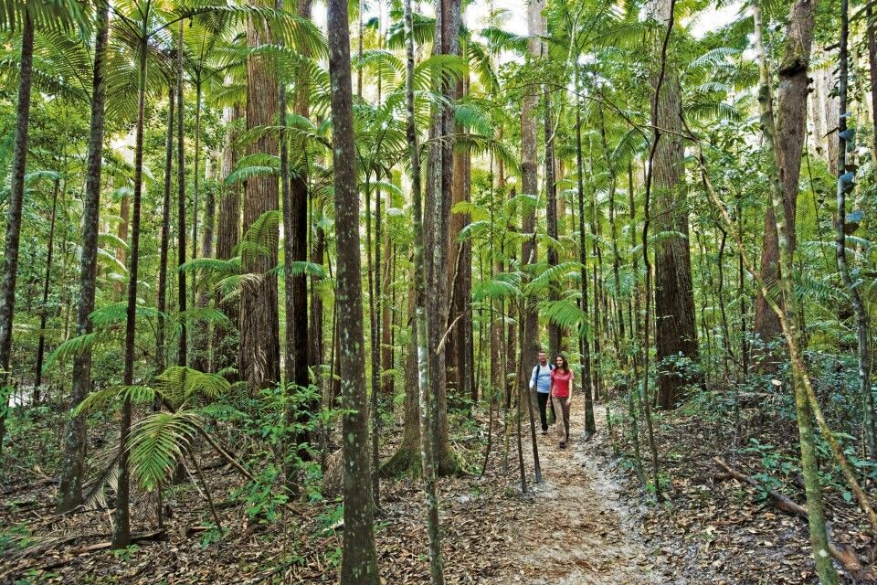 Pile Valley couple walking Rainforest