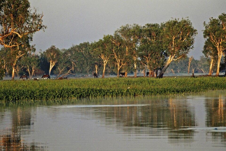 Yellow Waters Lagune