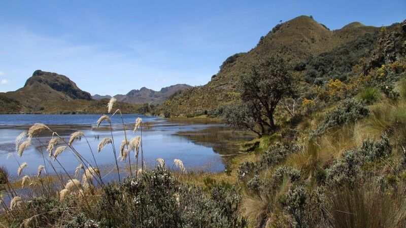 Cajas-Nationalpark © Diamir