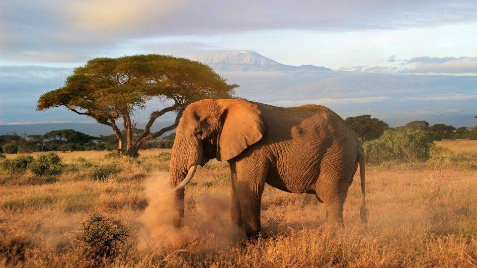 Morgendämmerung im Amboseli Nationalpark