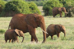 Elefanten fressen täglich bis zu 200 kg