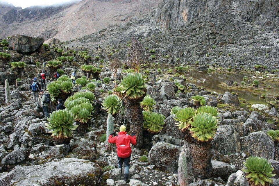 Trekking-Gruppe am Mount Kenya