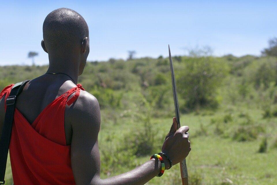 Massai prüft die Landschaft auf einer Safari zu Fuß