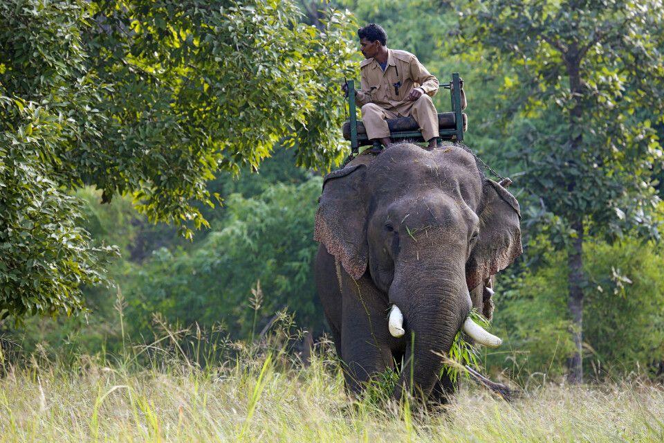 Safarierlebnis auf dem Rücken eines Elefanten