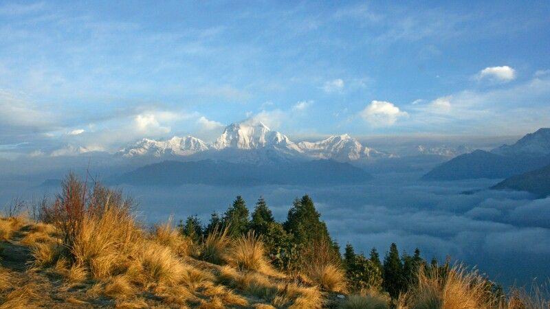 Blick vom Poon Hill auf Dhaulagiri (8167 m) © Diamir