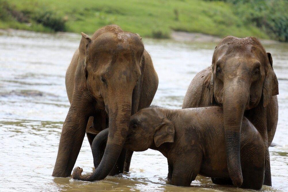 Elefantenfamilie im Yala NP
