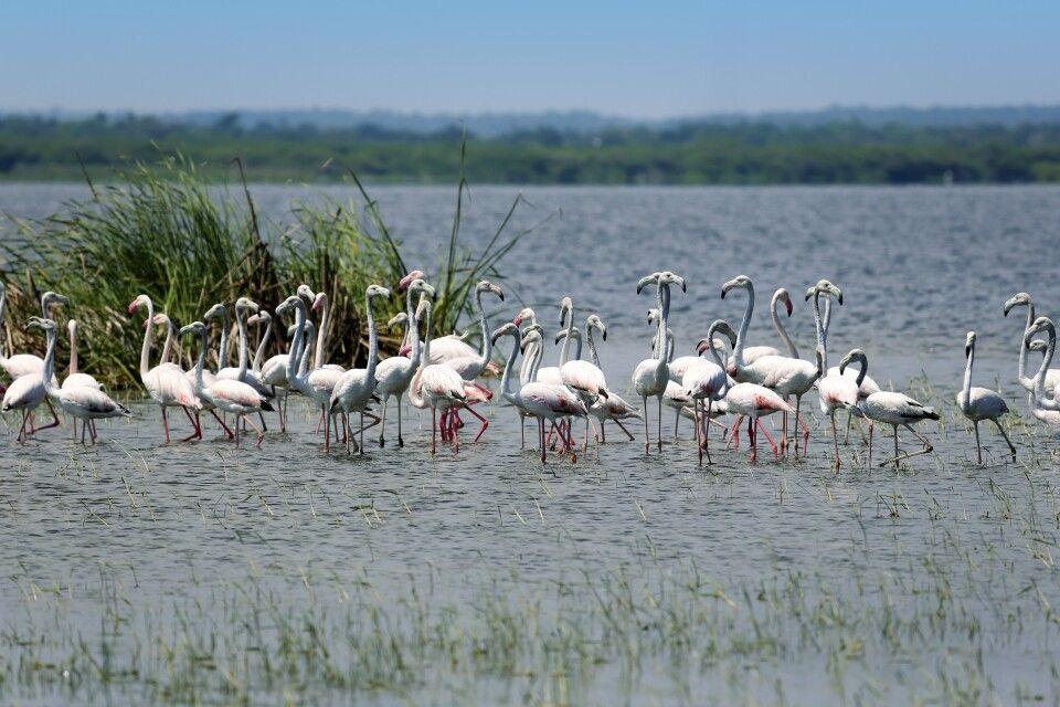 Flamingos unterwegs von Colombo nach Jaffna