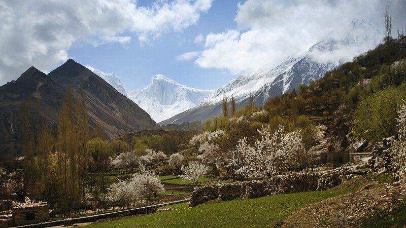 Während im Nagarland die Kirschbäume blühen, hüllt sich der Spantik in ewiges Eis. © Diamir