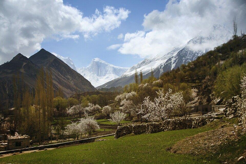 Während im Nagarland die Kirschbäume blühen, hüllt sich der Spantik in ewiges Eis.