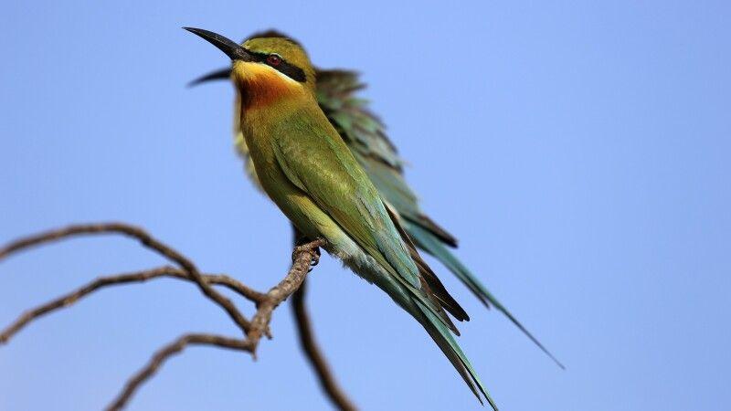 Vogelwelt im Yala NP  © Diamir