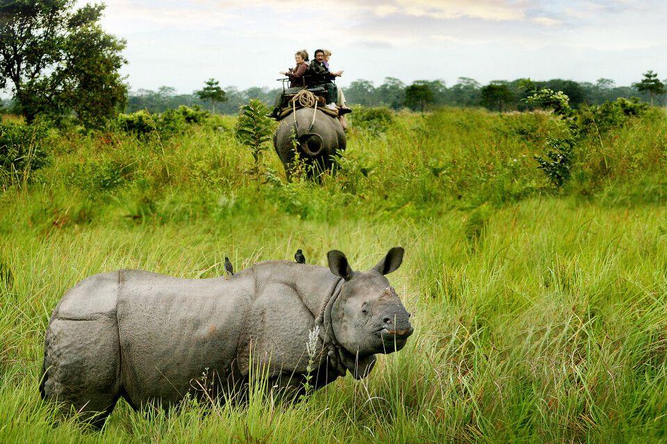 Nashorn im Kaziranga NP