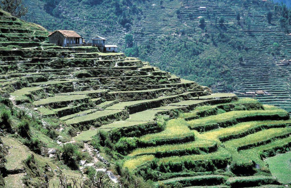 Terrassen-Anbau in der Annapurna-Region