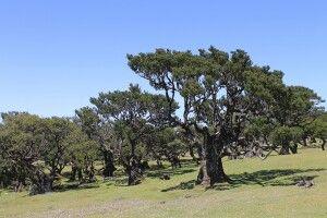Uralte Wälder
