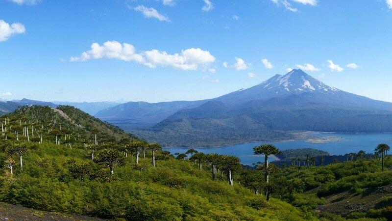 Araukarienwald vor dem Vulkan Llaima im Conguillio-Nationalpark © Diamir