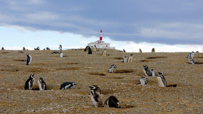 Magellan-Pinguinkolonie auf der Isla Magdalena © Diamir