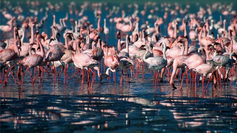 Flamingos © Diamir