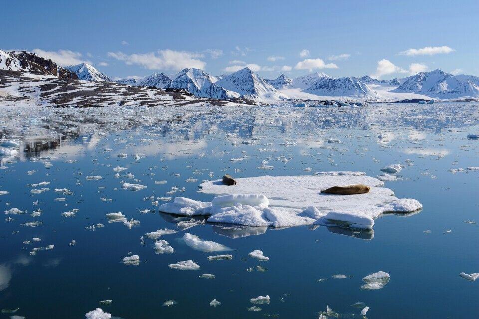 Kaiserwetter im Königsfjord: Gletscher-Cruise mit zwei Bartrobben auf einer Eisscholle