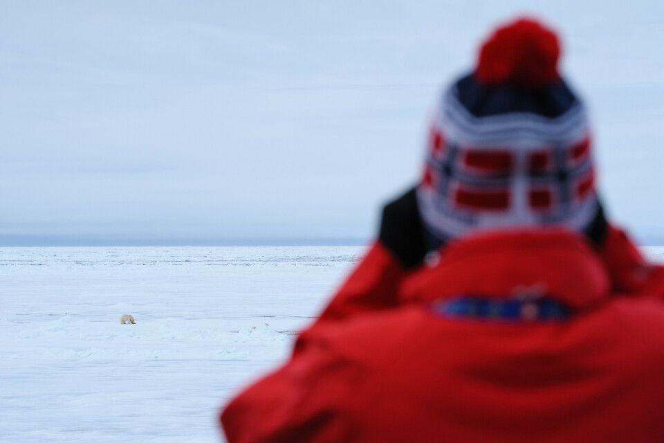 Beim Mittagessen beobachtet: Eisbär mit (mutmaßlichen) Robbenresten