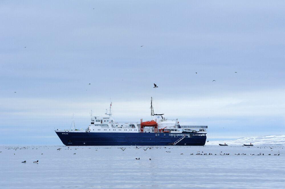 Ein Schiff, zwei Zodiacs, viele Vögel: die Ortelius