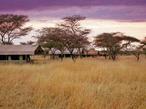 Serengeti Wildcamp