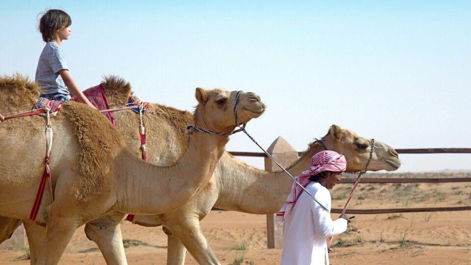 Kamelreiten in der Wüste des Omans