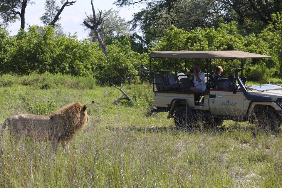 Einmalige Erlebnisse: Löwensichtung