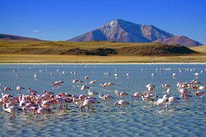 Flamingos in einer Hochlandlagune