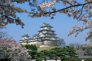 Burg Shirasagi-jo in Himeji zur Kirschblüte