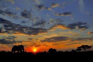 Elefanten im Caprivi-Streifen