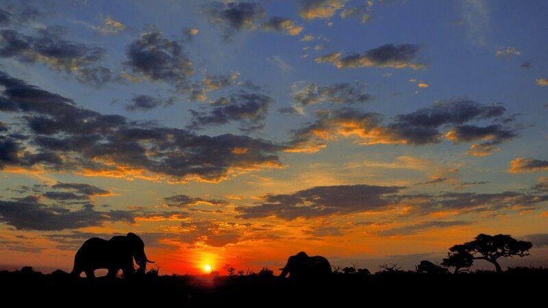Elefanten im Caprivistreifen © Diamir