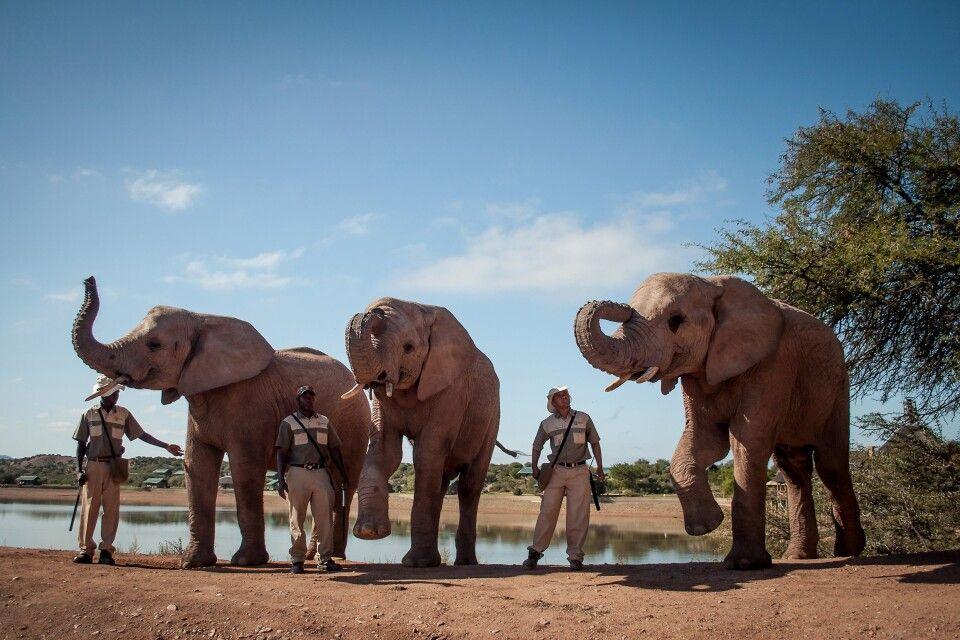 Elefanten-Begegnungen miterleben