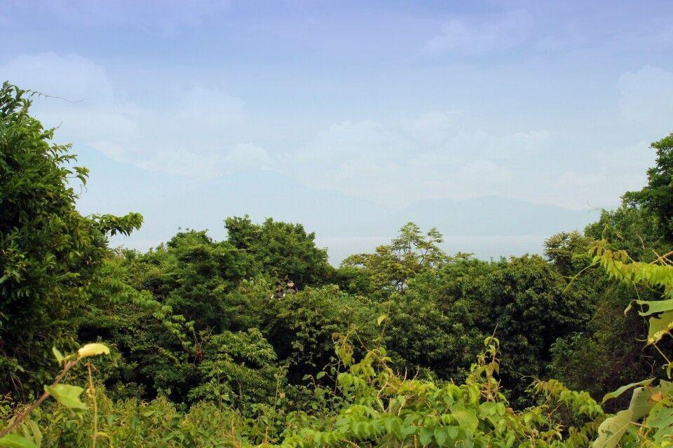 Regenwald bei Hoi An