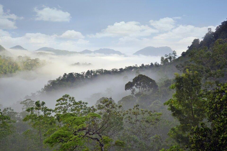 Sinharaja-Regenwald